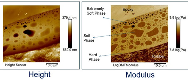 AFM topography and modulus mapping image